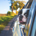Orlando Auto Accident Attorney Dog Law