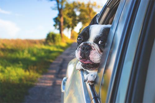 Orlando Auto Accident Attorney Dog Law
